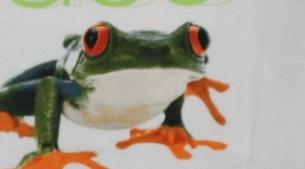 frog-race-i-456x456